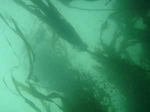 kelp_ericLemar