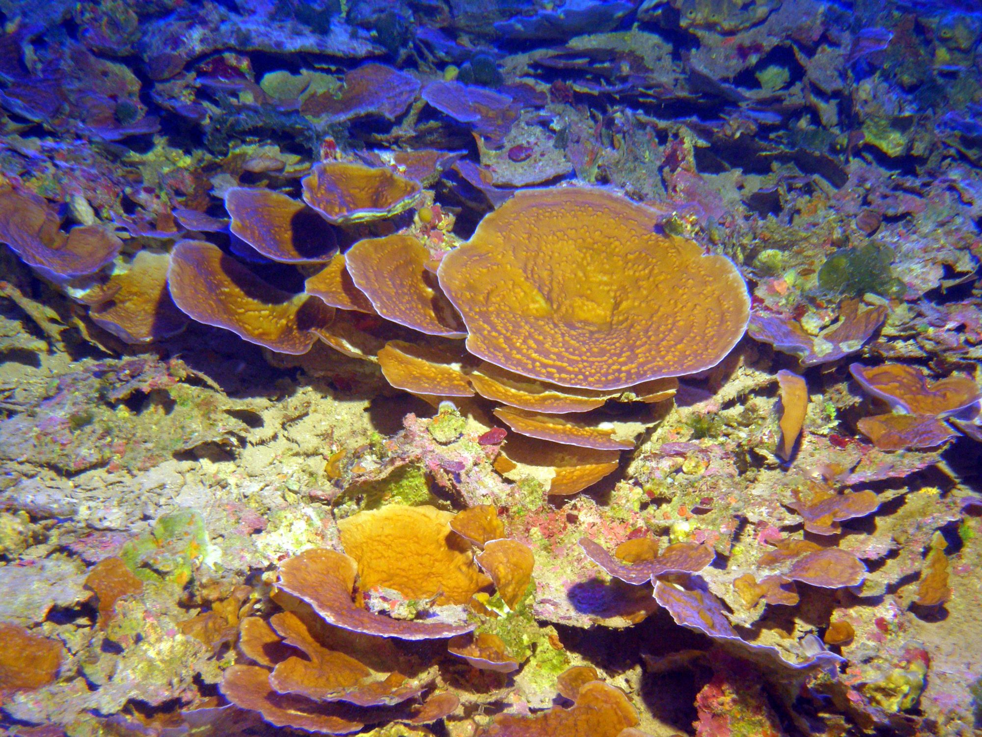 Corals that live in the mesophotic zone