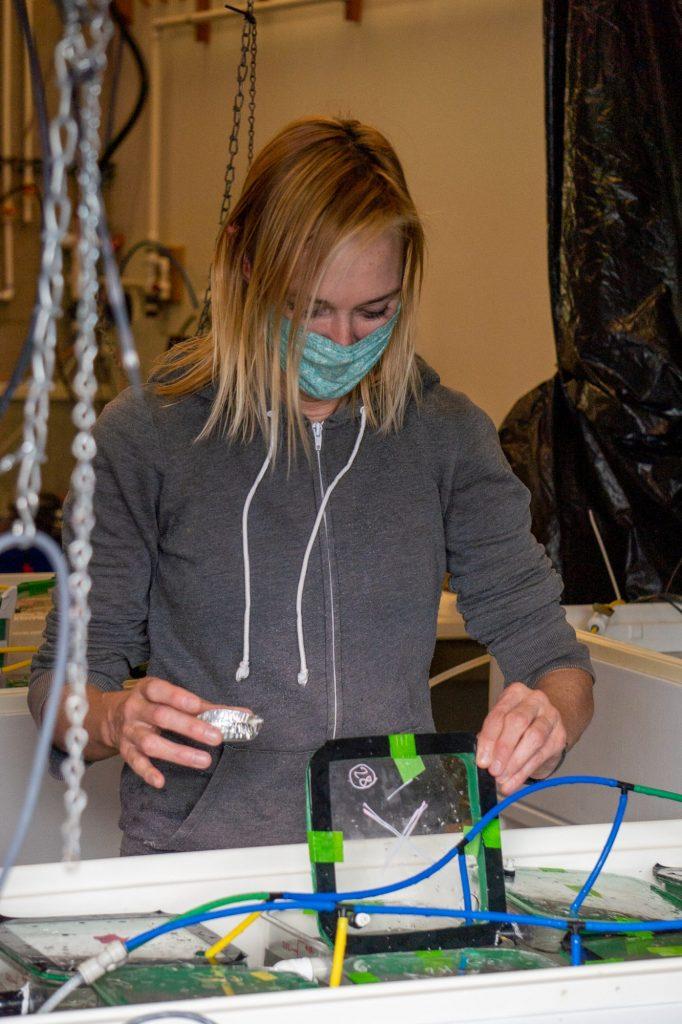Jacquelynn O'Maley feeding kelp to urchins in the lab